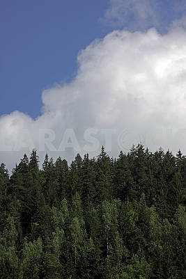 Coniferous forest and clouds in the sky
