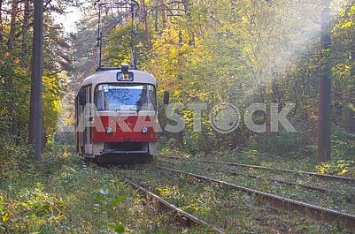 Tram in the Forest Vodice