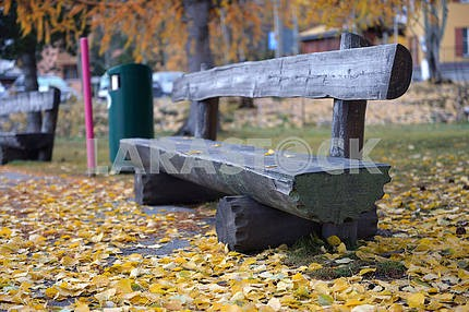 bench in the park among yellow leaves