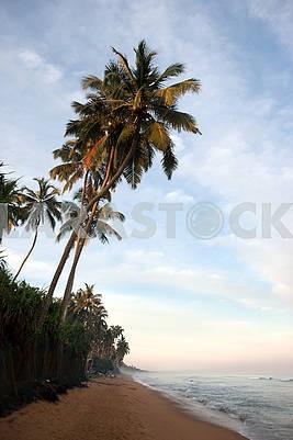 Nature on the island of Sri Lanka