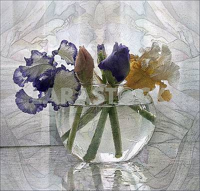 Flowers of irises in a round glass transparent vase. Artistic processing is a picture.