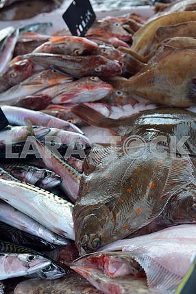 Flatfish, mackerel, surmullet