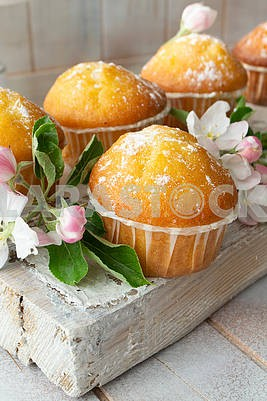 Traditional muffins with powdered sugar on wooden board and apple flowers. Spring, Easter, celebration concept.