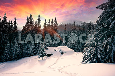 Christmas House in the Carpathians