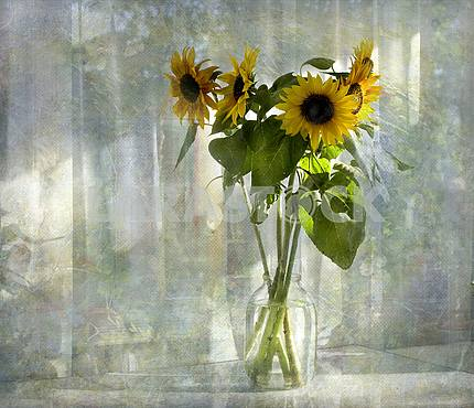 Still life. Bouquet of five sunflowers in a glass jar. Treatment.