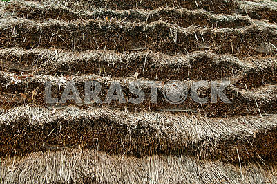 Yellow old dry  background  of a straw roofcloseup . Thatched ro
