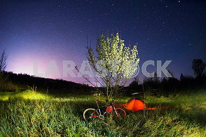 Mountain bike under a blooming tree at night
