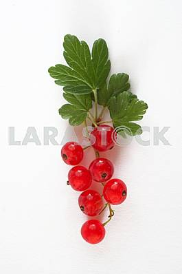 Sprig of red currants isolated on white background