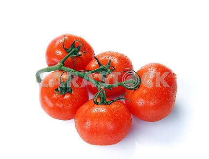 Red tomatoes on a branch with water drops