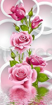 3д иллюстрация, розовые розы с каплями воды и белые кольца