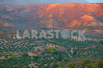 Nice sunrise on a hill landscape. Olive trees in a hill's shadow.