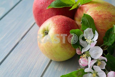Belarussian apples and apple tree blossoms on a wooden background