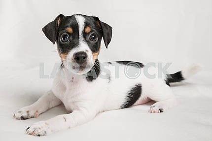 Puppy dog with black spots on the back