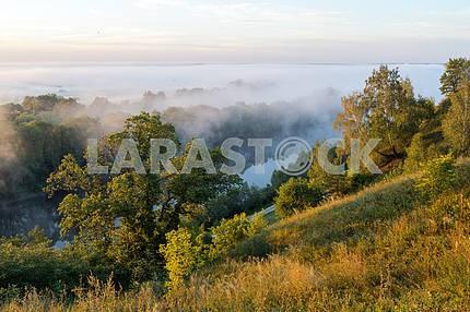 Gums Trees and fog. Mezin. Chernihiv region