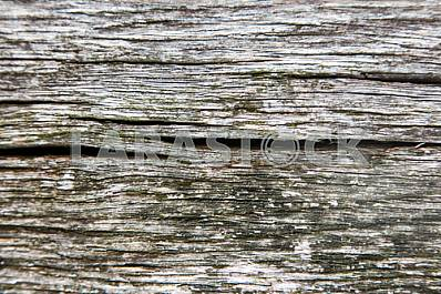 Wood texture with nature pattern