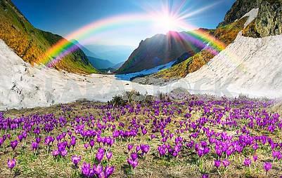 Floral mountain spring