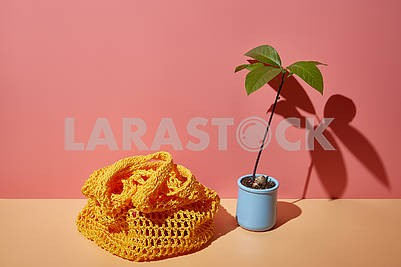Avocado sprout and string bag on a colored corner background with copy space in bright sunny shadows.