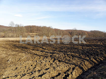 Springtime is coming,early works,countryside,Croatia,13