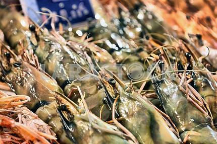 Show-window of seafood