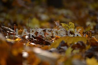 Autumn, yellow leaves