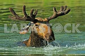 Elk Forest