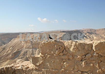 Bird in the Masada fortress in Israel