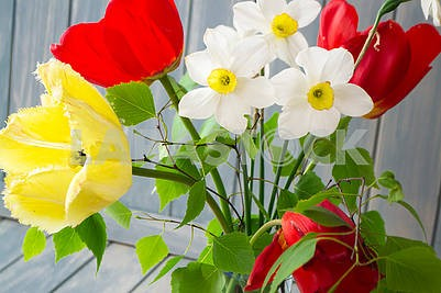 Spring bouquet with yellow and red tulips, narcissus and branch of birch. Mothers day or Easter card.