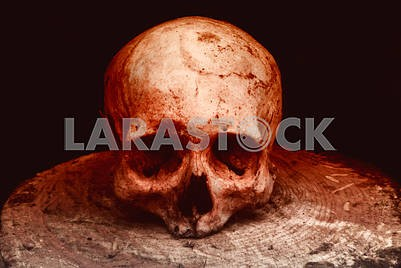 Real human skull on a stump on a black and red isolated background.