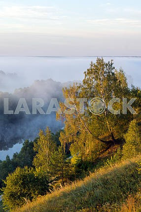 Trees on a background of fog. Mezin. Chernihiv region