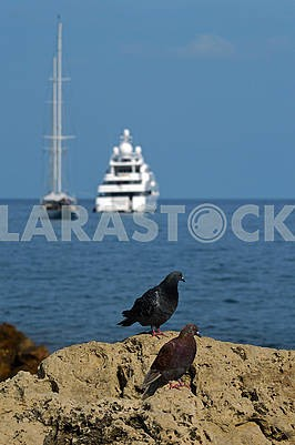 Two pigeons on the background of the sea