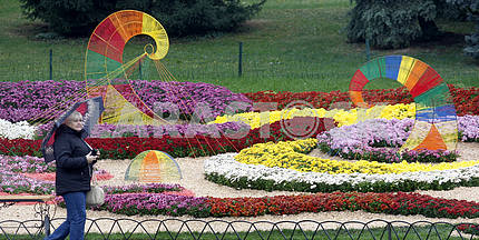 A woman walks past the composition of chrysanthemums