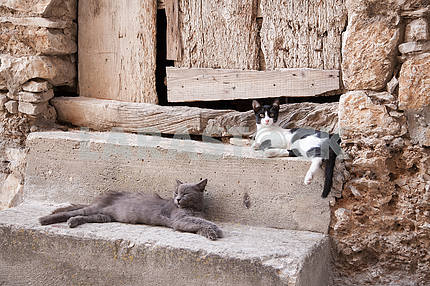 Two cats on a stone