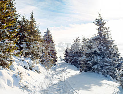Snow-covered road in the mountains, snow-covered trees, beautifu