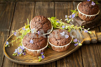 Chocolate muffins with blue spring flowers on dark backgroun