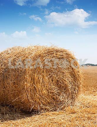 Rolls of hay in a field in autumn