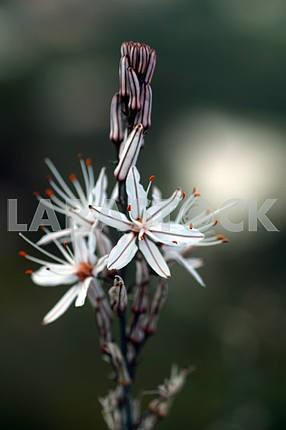 Flowers in Cyprus