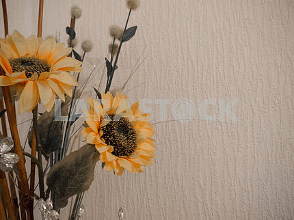 Two Sunflowers Isolated on a Textured White Background