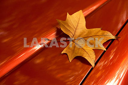 The golden autumn leaf on the car