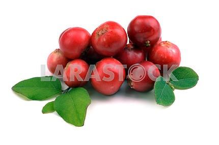Ripe red cranberries