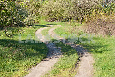 Winding road through the spring orchard