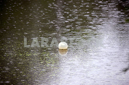 Raindrops on surface of pond