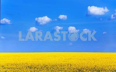 Rape field under the blue sky