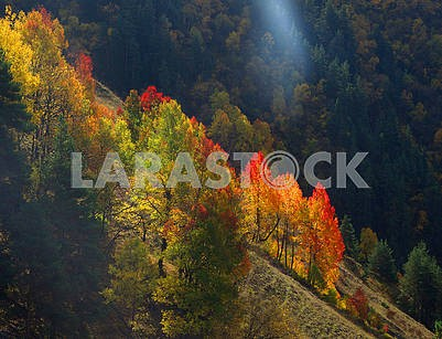 Yellow-red trees on a rock in Tusheti