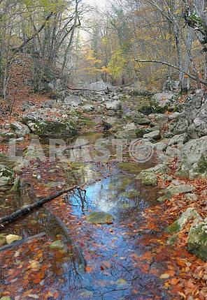 The mountain river in beechen autumn wood