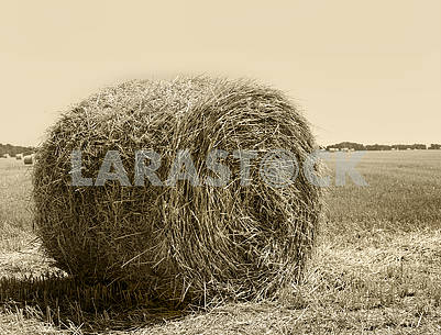 Round bales of hay in the autumn field