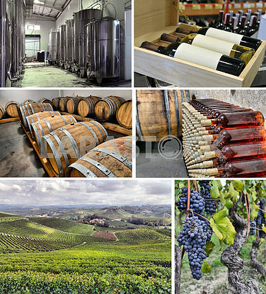 set of images of winemaking
