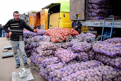 Trade in potatoes on the wholesale market in Kiev