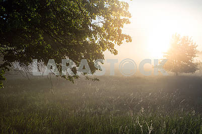beautiful natural summer background. the sun's rays pass through a tree