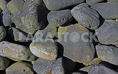 Large oval stones