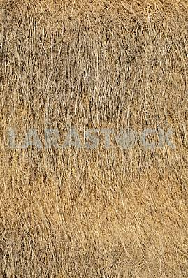 The background of straw, hay.